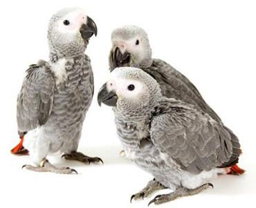 Cría de pájaros en Pajarería Villena