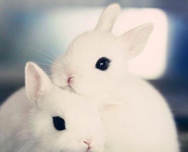 Venta de conejos en Pajareria Villena